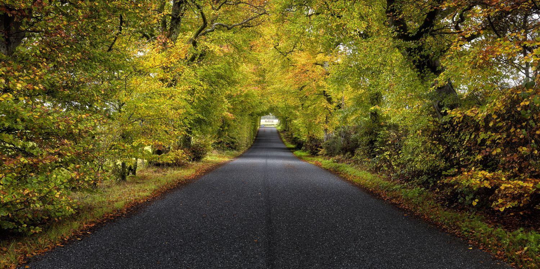Обои осень, дорога, деревья, пейзаж на телефон | картинки пейзажи