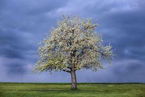 Фото бесплатно пейзаж, цветение, дерево