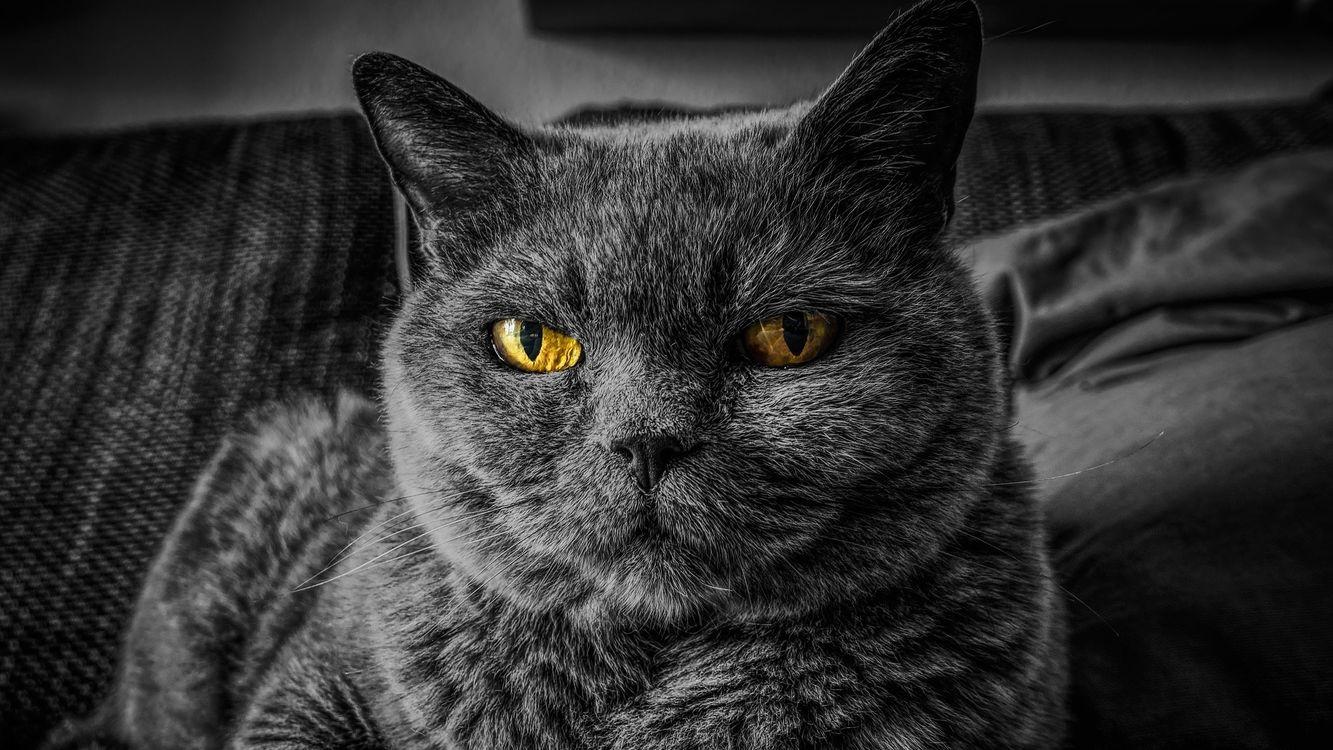Фото монохромный лежа величественная кошка - бесплатные картинки на Fonwall