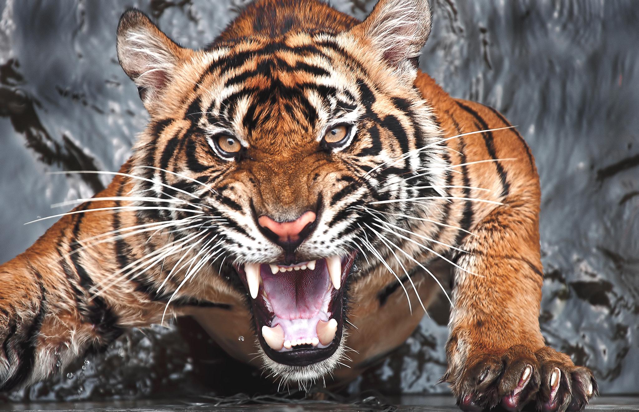 фото рычащих животных подсолнухов создает