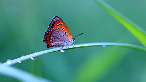 Photo free butterfly, water drop, grass