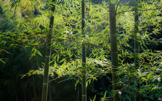 Фото бесплатно япония, лес, растения