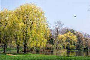 Бесплатные фото природа,пруд,сценический,парк,деревья,плачущие ивы,пейзаж