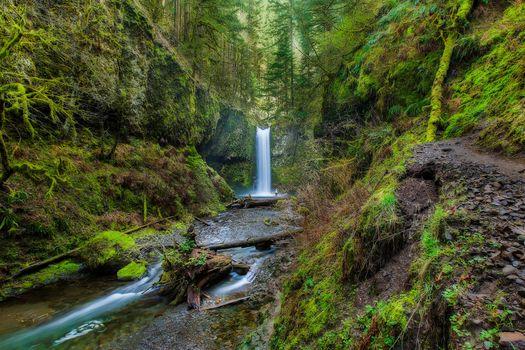 Фото бесплатно Wiesendanger Falls, Columbia River Gorge, Водопад Визендангер, 55-футовый водопад на лиственничной горной тропе в ущелье реки Колумбия