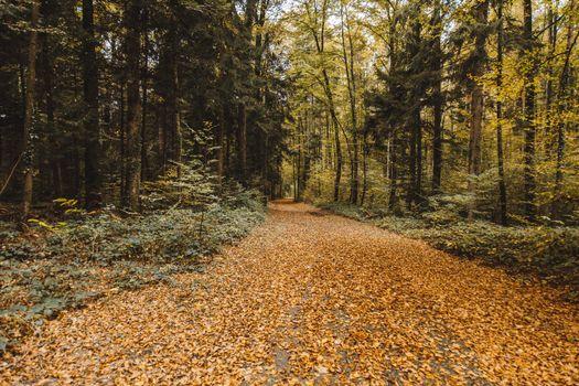 Осенняя лесная дорога · бесплатное фото