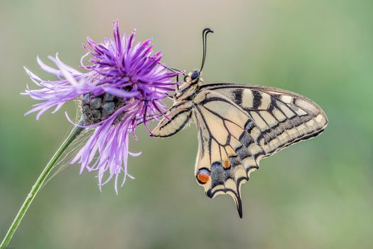 Screensaver butterfly, flower for phone