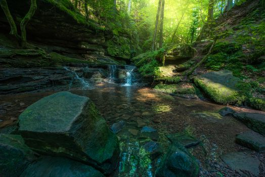 Photo free Baden-Wuerttemberg, Germany, forest