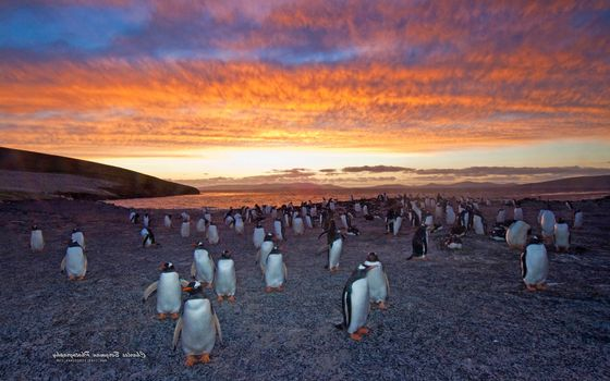 Фото бесплатно пингвины, птицы, берег