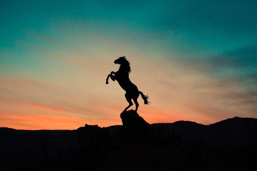 Фото бесплатно закат, силуэт, конь