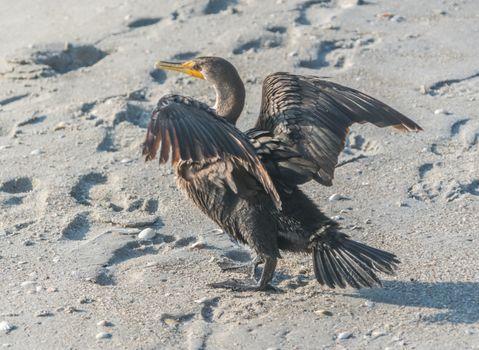 Фото бесплатно животное, птицы, следы