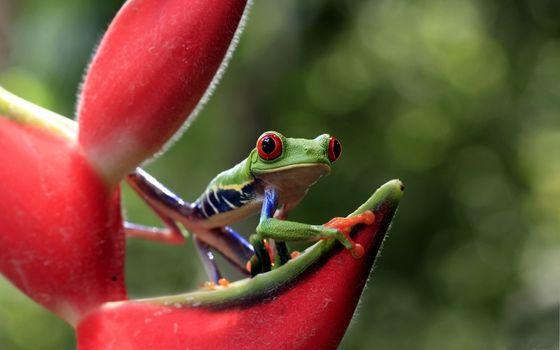 Photo free leaf, amphibian, frog