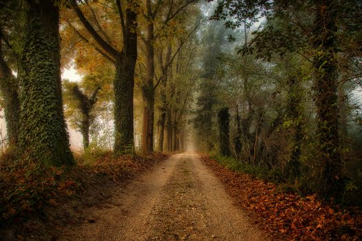 Photo free autumn forest, road, fallen leaves