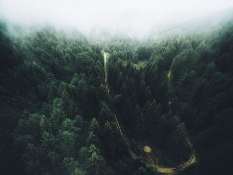 Photo free green, tropical forest, geographic feature