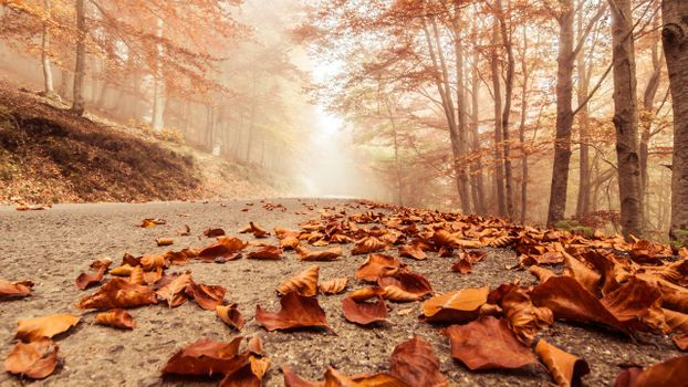 Photo free leaves, nature, road