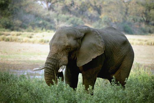 Photo free elephants and mammoths, tusks, mammal
