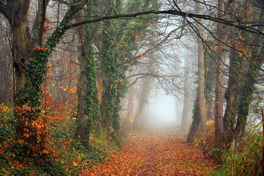 Download wallpaper autumn, autumn, road
