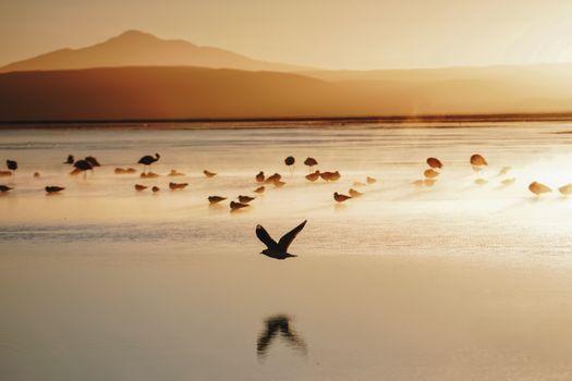Фото бесплатно птицы, берег, природа