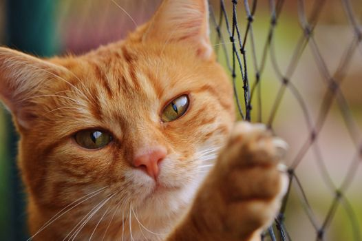 The ginger cat on the fence · free photo