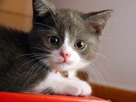 Фото бесплатно котенок, кошачий, нос