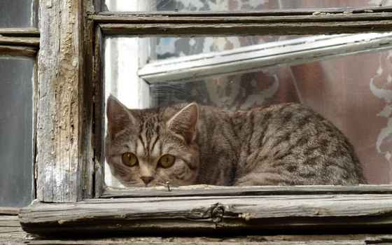 Photo free cat, window, mustache