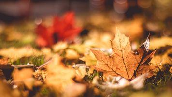 Фото бесплатно падение, листья, макро
