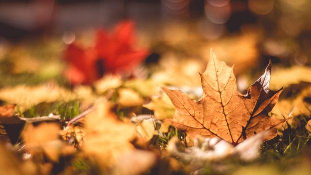 Заставки падение, листья, макро