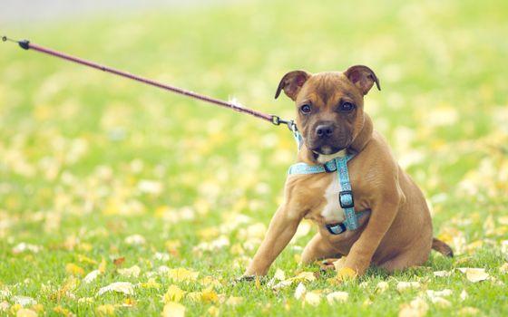 Photo free dogs, dog like mammal, puppy