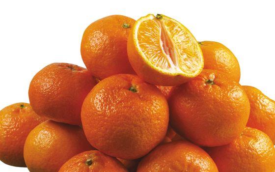 Photo free the orange, flowering plant, yummy