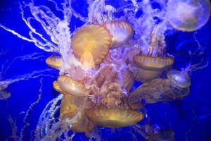 Бесплатные фото море,вода,жидкость,морские обитатели,медузы,свечение,подводный мир
