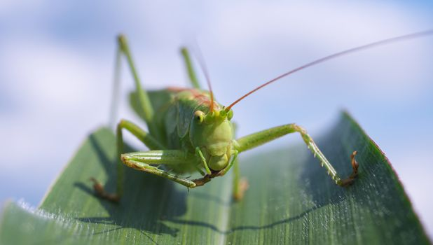 Photo free leaf beetle, arthropod, insect