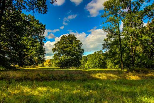 Бесплатные фото поле,деревья,пейзаж
