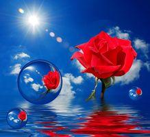 Фото бесплатно цветок, цветочные композиции, цветочные