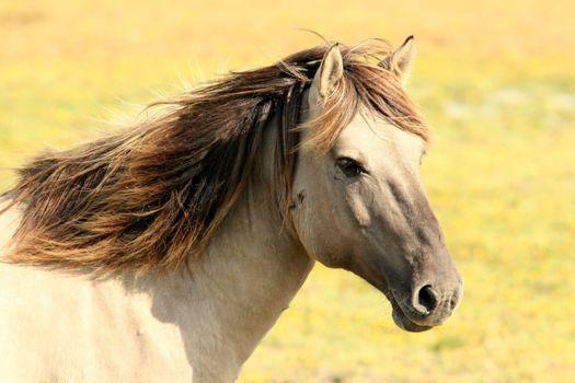 Photo free nature, pasture, horse