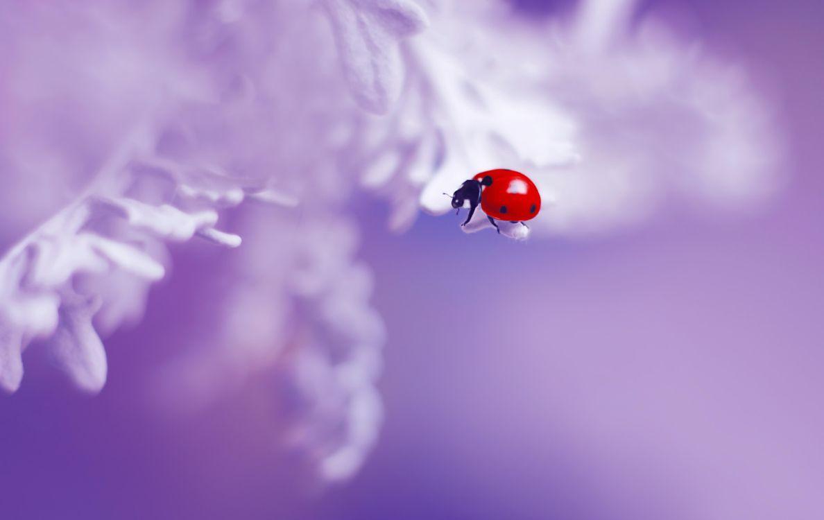 Бесплатно макро, насекомое - фото красивые