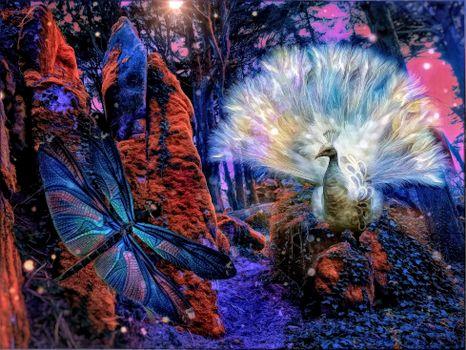 Фото бесплатно павлин, стрекоза, жар птица
