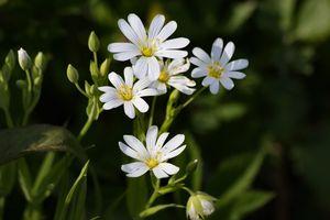 Бесплатные фото природа,цветы,ромашки