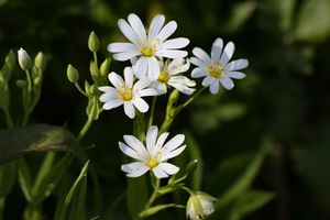 Photo free nature, flowers, daisies