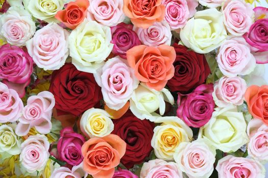 Photo free roses, colorful, bouquet