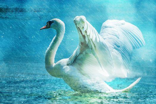 Фото бесплатно море, вода, птица