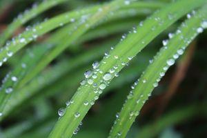 Фото бесплатно папоротники и хвощи, макросъёмка, зелёный