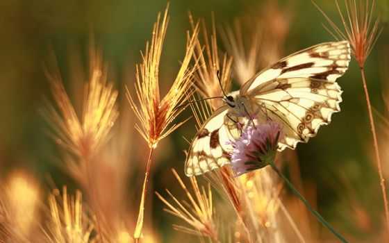 Photo free butterfly, plants, insect