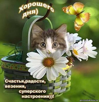 Открытка бесплатно доброго дня и хорошего настроения, пожелание хорошего дня, пожелания хорошего дня