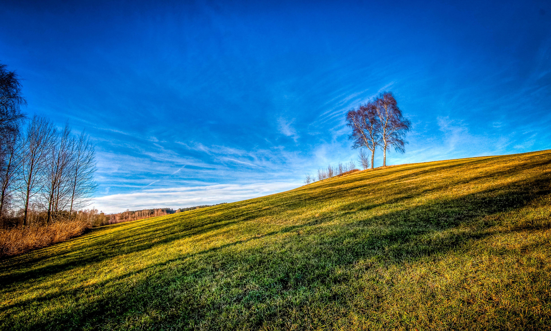 Обои холм, деревья, природа
