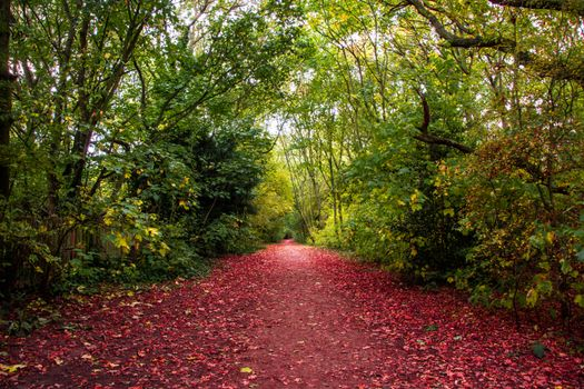 Photo free red leaves, road, trees