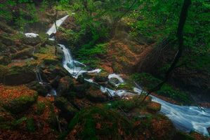 Бесплатные фото Провинция Бискайя, Испания, Страна Басков, лес, деревья, речка, водопад