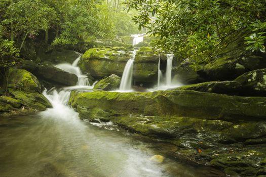 Фото бесплатно скалы, мох, лес