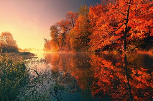Photo free autumn, foliage, river bank