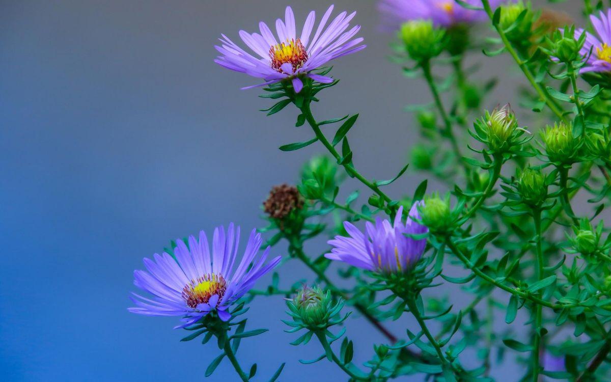 Фото бесплатно куст, ветка, цветы - на рабочий стол