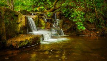 Фото бесплатно растения, деревья, водопад