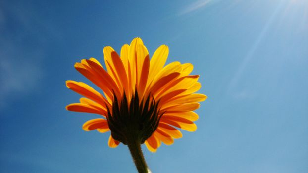 Фото бесплатно солнечный свет, природа, небо